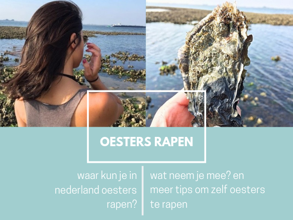 Zelf oesters rapen wat neem je mee? hoe maak je oesters open?